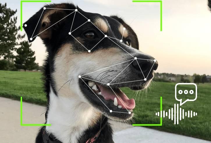 chien reconnue par l'ia qui analyse l'aboiement pour comprendre le chien
