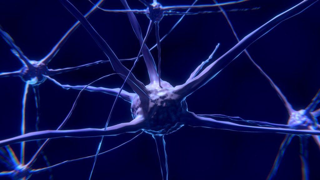 réseau de neurone IA pour l'exemple de l'intelligence artificielle sur les animaux