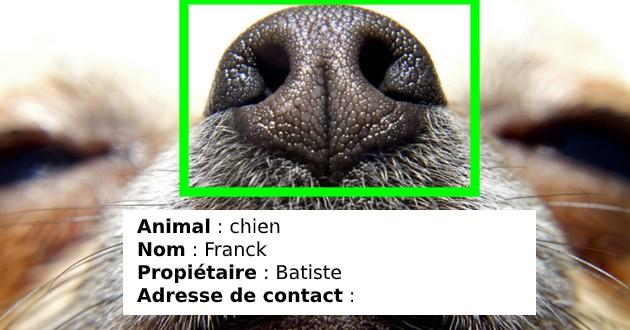 intelligence artificielle sur la truffe du chien pour l'exemple artificielle megvii